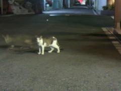 足立陸男 プライベート画像/外で撮った猫 生徒会長風猫+残像拳