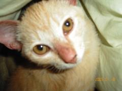 足立陸男 プライベート画像/ちょら 2004年01月18ちょら3ヶ月3