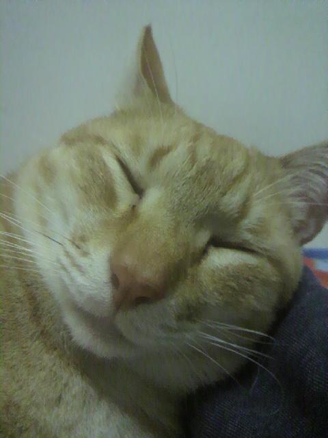 2010年04月12日ちょら睡眠中