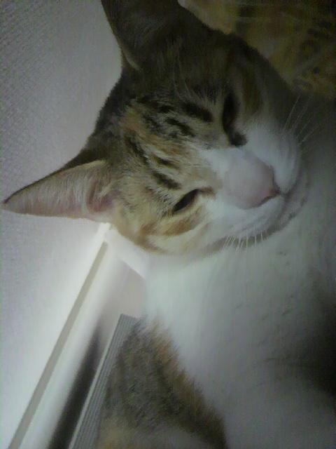 2010年04月18日ぽにょん1