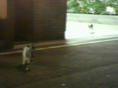 足立陸男 プライベート画像/外で撮った猫 生徒会長風猫ダブル