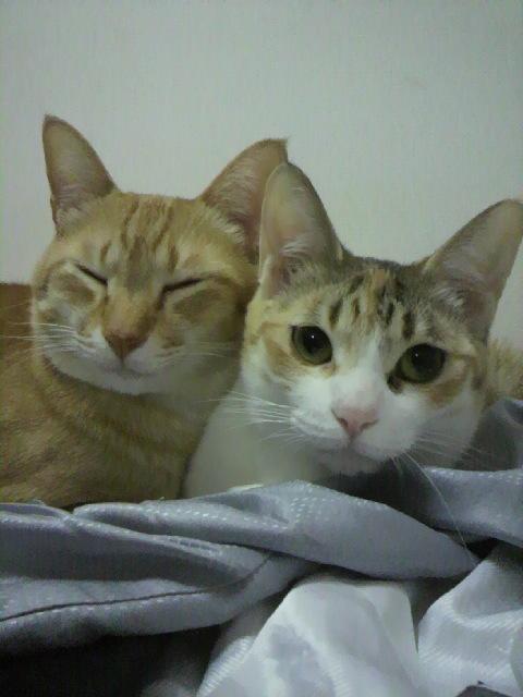 2010年04月14日ちょら(左)とぽにょん(右)2