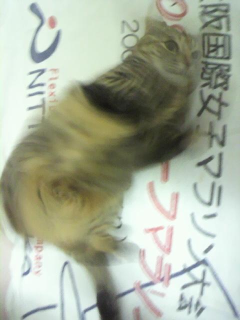 2010年04月14日暴れ狂うなちゅ