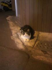 足立陸男 プライベート画像/外で撮った猫 2010年08月31日近所の猫