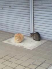 足立陸男 プライベート画像/外で撮った猫 2010年12月03日近所の猫