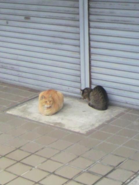 2010年12月03日近所の猫