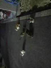 足立陸男 プライベート画像/外で撮った猫 2010年09月20日集合写真