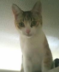 足立陸男 公式ブログ/猫(ぽにょん) 画像1