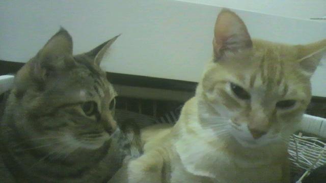 2010年05月28日ちょら(右)となちゅ(左)