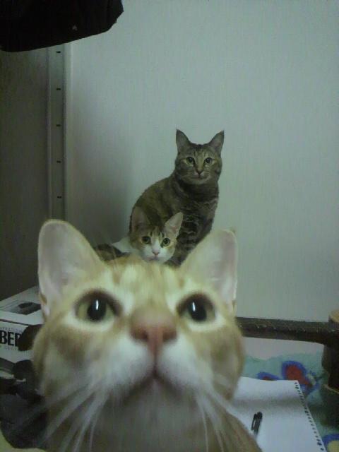 2010年08月15日我が家の猫s