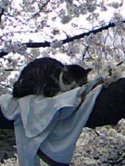 今吉祥子 公式ブログ/上野公園にて 画像1