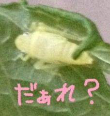 藤堂えり 公式ブログ/ひややっこ 画像2
