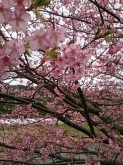 茶子 公式ブログ/早めのお花見 画像3