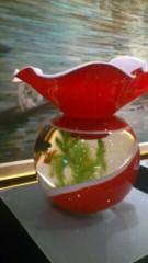 茶子 公式ブログ/お洒落な、金魚バチ 画像1