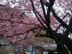 茶子 公式ブログ/早めのお花見 画像2