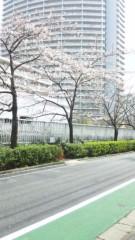 明日果 公式ブログ/桜 画像1