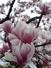 明日果 公式ブログ/昨日撮った植物☆ 画像3