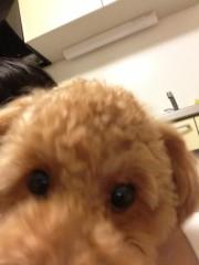 椎名鯛造 公式ブログ/犬と戯れるのだ。 画像2