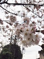 椎名鯛造 公式ブログ/さくら咲く。 画像1