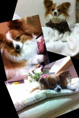 椎名鯛造 公式ブログ/犬達よ。 画像1