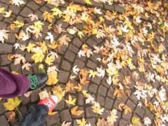 椎名鯛造 公式ブログ/秋深し、隣は誰のスニーカー? 画像1