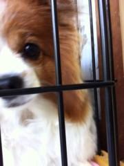 椎名鯛造 公式ブログ/犬からの〜告知。 画像1