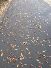 椎名鯛造 公式ブログ/絨毯。 画像1