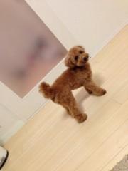 椎名鯛造 公式ブログ/犬と戯れるのだ。 画像1