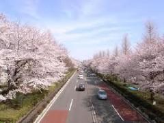 沖津賢一郎 プライベート画像/etc ktcity桜