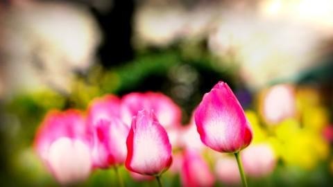 「だって春だもん♡」ってかー!
