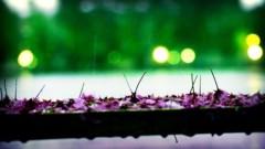 沖津賢一郎 プライベート画像/雨の写真 雨の桜ベンチ