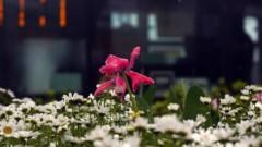 沖津賢一郎 プライベート画像 21〜40件/マイクロフォーサーズマスターへの道 かつてあんなに憧れた場所…このタコが!!!