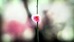 沖津賢一郎 プライベート画像 61〜80件/マイクロフォーサーズマスターへの道 (no title)