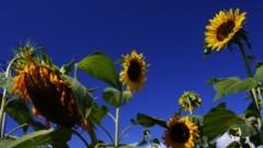 沖津賢一郎 プライベート画像/花 主に咲いてます