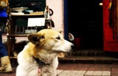沖津賢一郎 プライベート画像 81〜97件/マイクロフォーサーズマスターへの道 美女犬