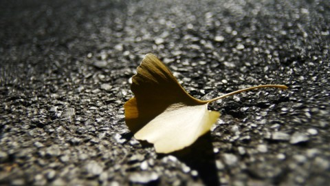 落っこちてきた葉っぱ