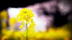 沖津賢一郎 プライベート画像 21〜40件/iPhone4Sで遊ぶ むかつくぐらいに可愛らしい。けっ!
