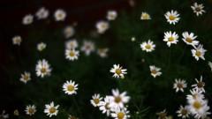 沖津賢一郎 プライベート画像/マイクロフォーサーズマスターへの道 w_flower01_1