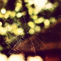 沖津賢一郎 プライベート画像 41〜60件/iPhone4Sで遊ぶ 蜘蛛の巣