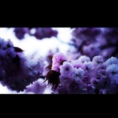 沖津賢一郎 プライベート画像/花 (no title)