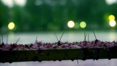 沖津賢一郎 プライベート画像 21〜40件/マイクロフォーサーズマスターへの道 雨の桜ベンチ