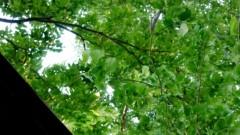 沖津賢一郎 プライベート画像/マイクロフォーサーズマスターへの道 グリーングリーングリーン