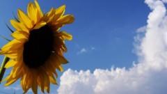 沖津賢一郎 プライベート画像/花 太陽がいっぱーい