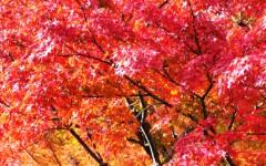沖津賢一郎 公式ブログ/ギンギラ慇懃、色っぽい。 画像2