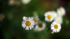 沖津賢一郎 プライベート画像/マイクロフォーサーズマスターへの道 貧乏草と虫