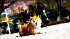 沖津賢一郎 プライベート画像/iPhone4Sで遊ぶ 「なんだ、またおまえかよ」
