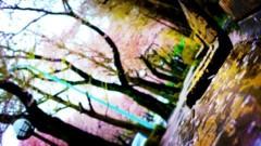 沖津賢一郎 プライベート画像 21〜40件/iPhone4Sで遊ぶ 桜の通り