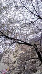 亜希多小娘 公式ブログ/春 画像1