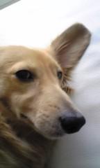 梶原ひかり 公式ブログ/久しぶりに愛犬ネタ 画像1