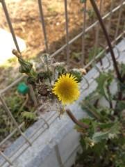 池城淳(ビキチンプロナウン) 公式ブログ/オニノゲシ 画像1